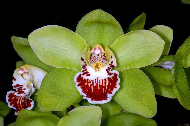 9 loai hoa dat nhat hanh tinh, co loai den vang 9999 cung khong la gi - 9