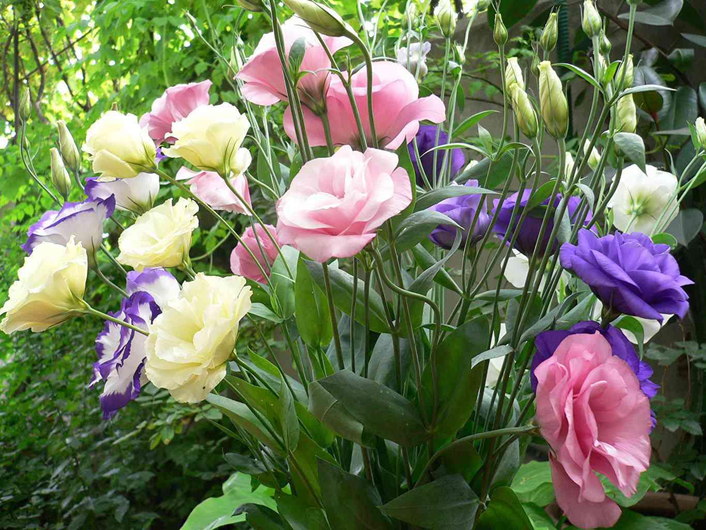 9 loai hoa dat nhat hanh tinh, co loai den vang 9999 cung khong la gi - 17
