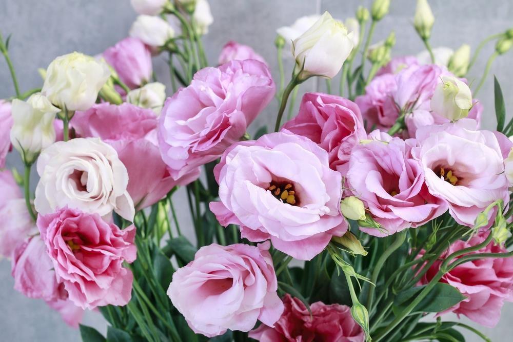 9 loai hoa dat nhat hanh tinh, co loai den vang 9999 cung khong la gi - 18