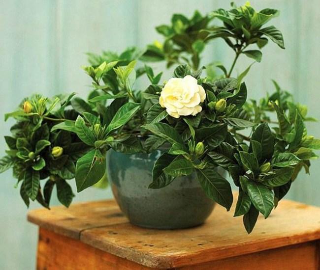 7 loại cây nên trồng trong nhà vào mùa đông - 1