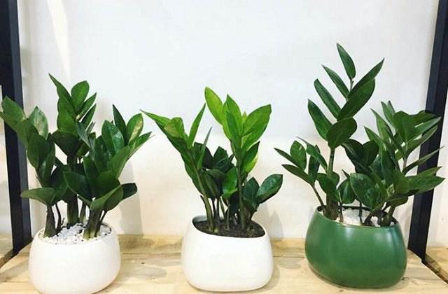 7 loại cây nên trồng trong nhà vào mùa đông - 4