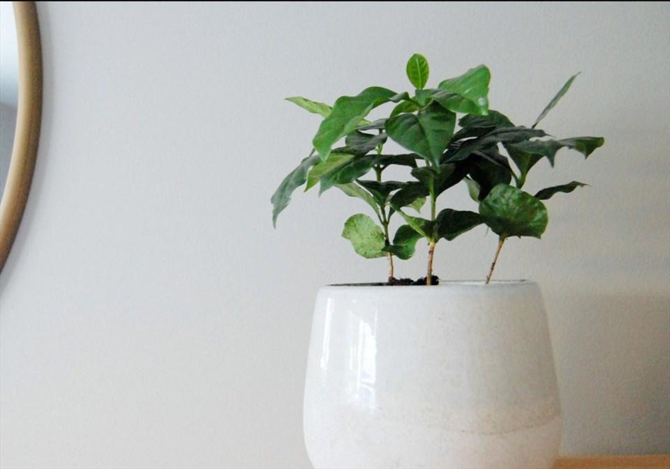 7 loại cây nên trồng trong nhà vào mùa đông - 5