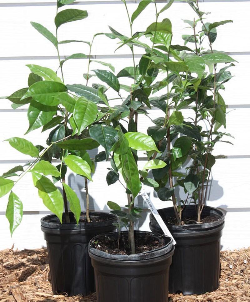 7 loại cây nên trồng trong nhà vào mùa đông - 6