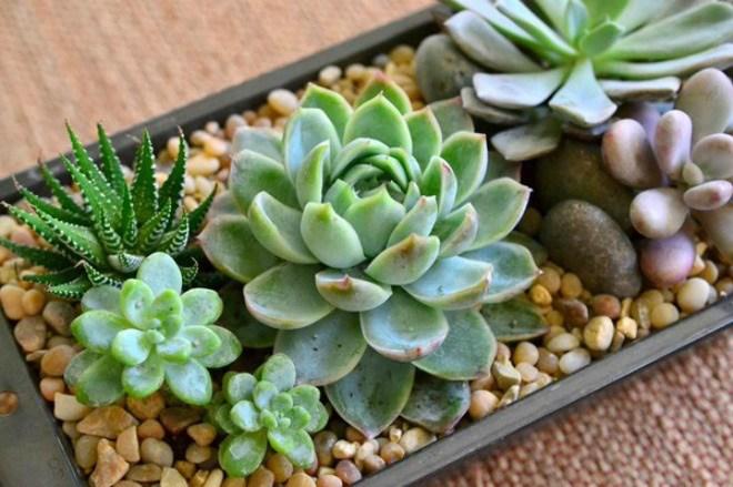 7 loại cây nên trồng trong nhà vào mùa đông - 8