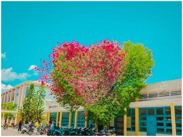 Bất ngờ cây hoa giấy hình trái tim nhìn như Tây, ai ngờ là có ở ngay Việt Nam mình