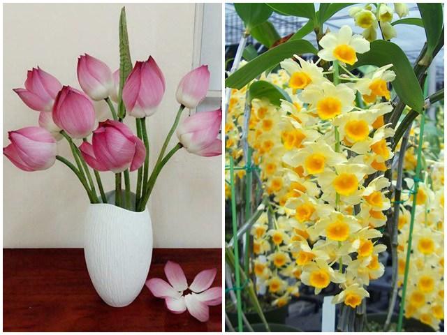 3 tháng cuối năm nhất định phải đặt loại hoa này trong phòng khách, kéo may mắn về gấp đôi