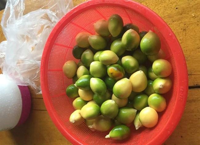 Cây lạ chờ mòn mỏi 10 năm mới ra quả, có chứa độc, ở Việt Nam bán hốt bạc - 10