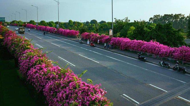 """Hà Nội: Cây cầu hoa giấy bất ngờ bung nở trở lại, check-in """"sương sương"""" có ngay ảnh đẹp! - 3"""
