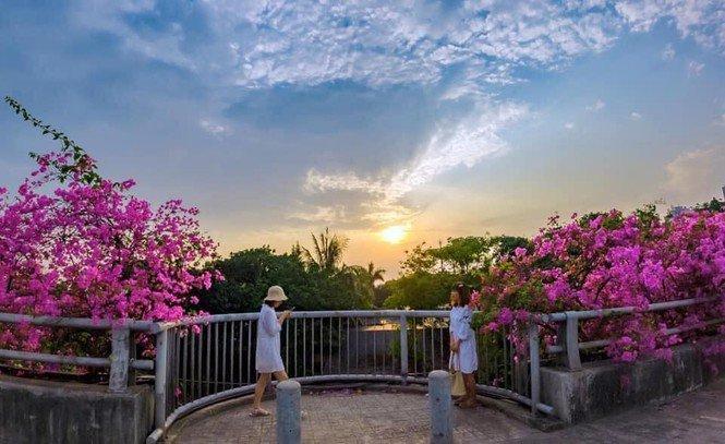 """Hà Nội: Cây cầu hoa giấy bất ngờ bung nở trở lại, check-in """"sương sương"""" có ngay ảnh đẹp! - 4"""