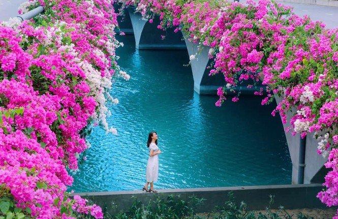 """Hà Nội: Cây cầu hoa giấy bất ngờ bung nở trở lại, check-in """"sương sương"""" có ngay ảnh đẹp! - 7"""