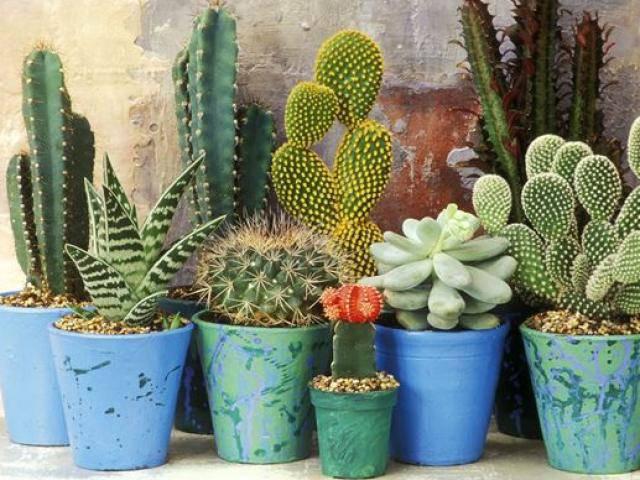 Ai ngờ trồng 6 loại cây này có thể hóa giải phong thủy xấu ở ban công nhà bạn - 4