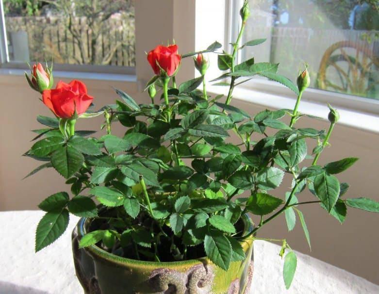 Ai ngờ trồng 6 loại cây này có thể hóa giải phong thủy xấu ở ban công nhà bạn - 6
