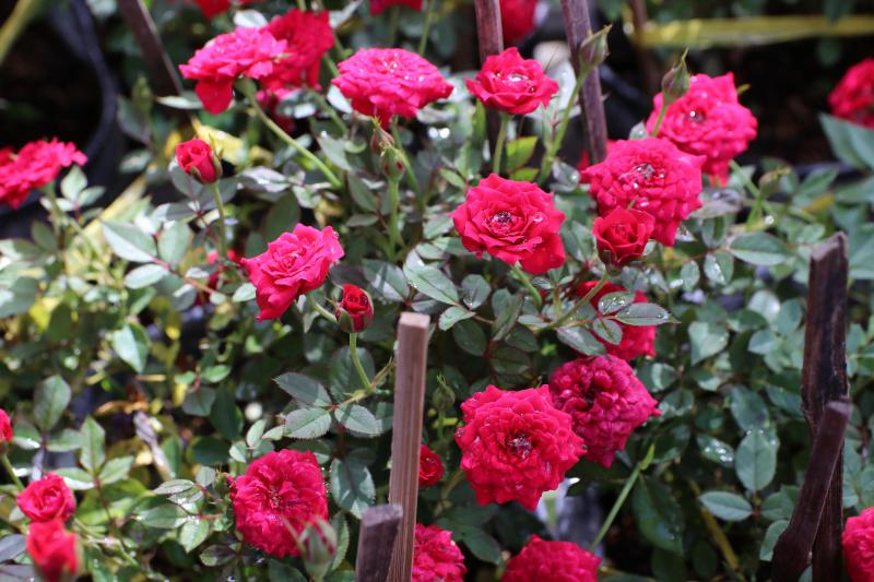 Ai ngờ trồng 6 loại cây này có thể hóa giải phong thủy xấu ở ban công nhà bạn - 7