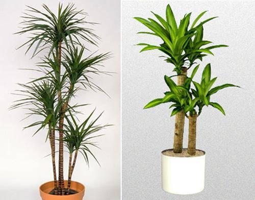Ai ngờ trồng 6 loại cây này có thể hóa giải phong thủy xấu ở ban công nhà bạn - 9