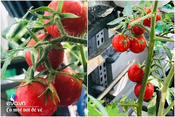 Bà nội trợ Sài Gòn 3 năm nay không phải đi chợ, thèm rau cứ lên sân thượng 15m2 - 5