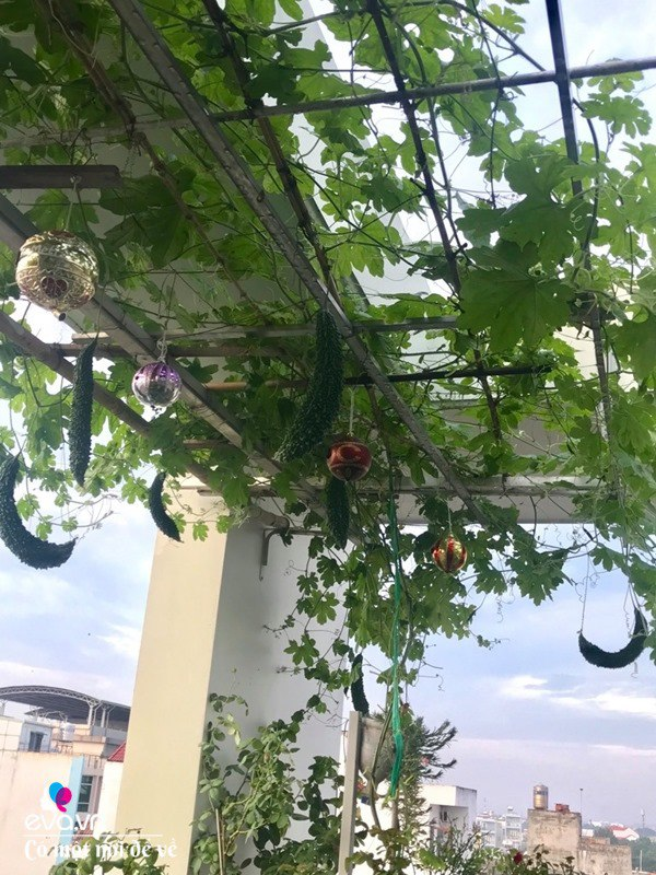 Bà nội trợ Sài Gòn 3 năm nay không phải đi chợ, thèm rau cứ lên sân thượng 15m2 - 20