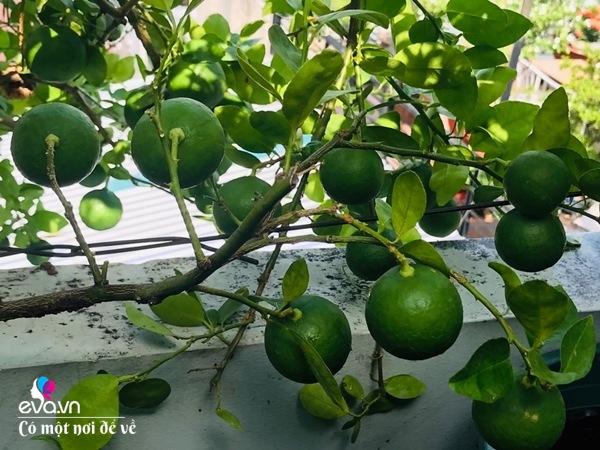 Bà nội trợ Sài Gòn 3 năm nay không phải đi chợ, thèm rau cứ lên sân thượng 15m2 - 15