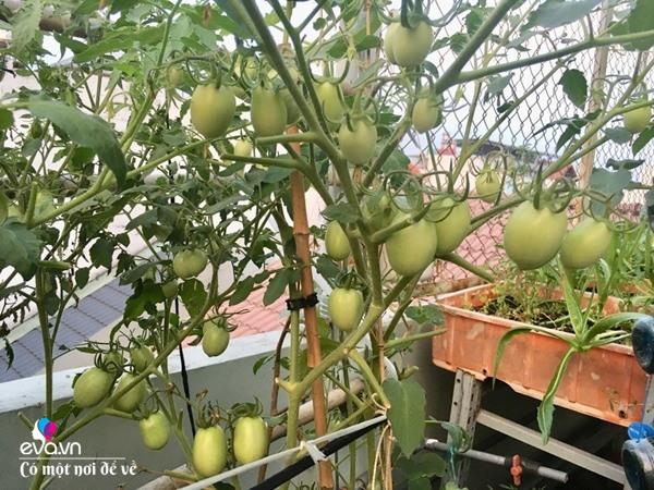 Bà nội trợ Sài Gòn 3 năm nay không phải đi chợ, thèm rau cứ lên sân thượng 15m2 - 27