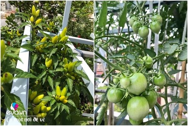 Bà nội trợ Sài Gòn 3 năm nay không phải đi chợ, thèm rau cứ lên sân thượng 15m2 - 25