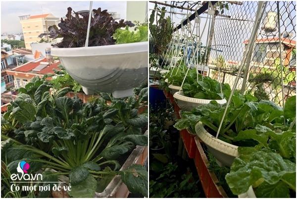 Bà nội trợ Sài Gòn 3 năm nay không phải đi chợ, thèm rau cứ lên sân thượng 15m2 - 16