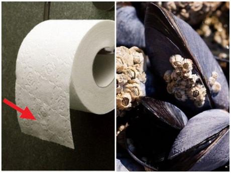Trước khi có giấy vệ sinh con người dùng gì thay thế? Câu trả lời sẽ khiến bạn vỡ òa