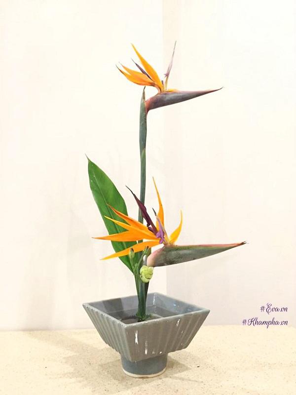 Hoa Thiên Điểu - Sự tích, ý nghĩa và cách cắm hoa đẹp - 4