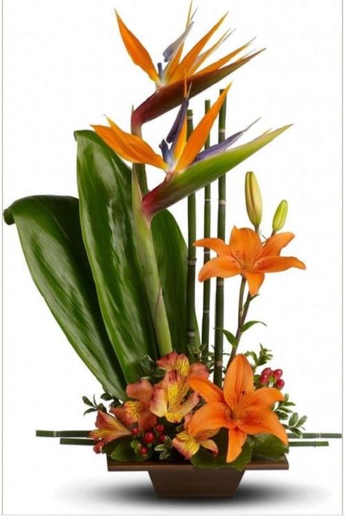 Hoa Thiên Điểu - Sự tích, ý nghĩa và cách cắm hoa đẹp - 7