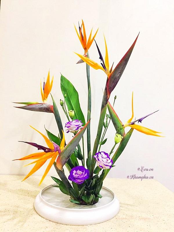 Hoa Thiên Điểu - Sự tích, ý nghĩa và cách cắm hoa đẹp - 9