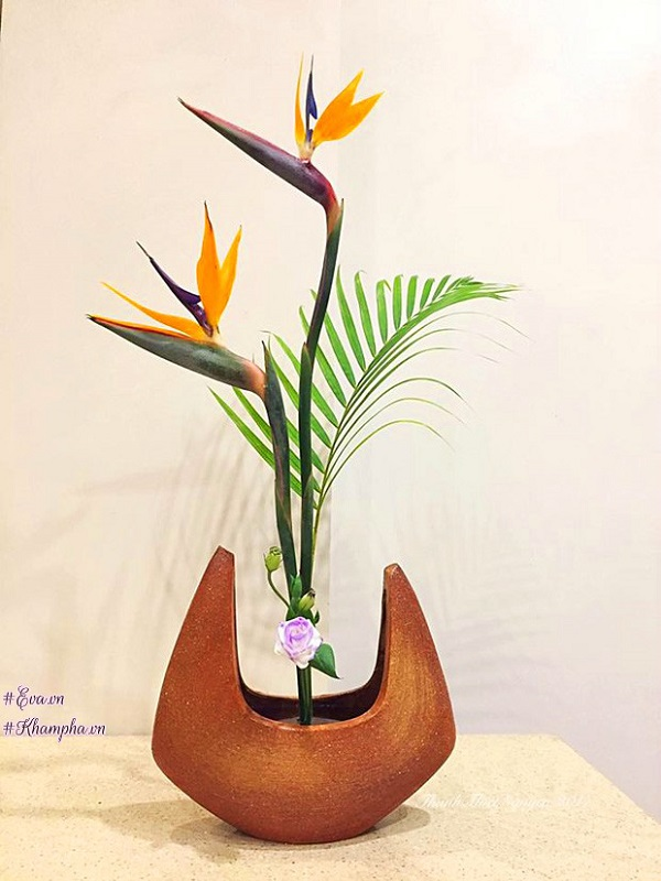 Hoa Thiên Điểu - Sự tích, ý nghĩa và cách cắm hoa đẹp - 5