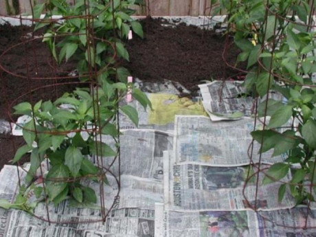 Giấy vụn không dùng đừng bỏ thùng rác, mang vứt ra vườn sẽ thấy điều kì diệu