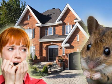 Cách đuổi chuột ra khỏi nhà đơn giản mà hiệu quả không ngờ