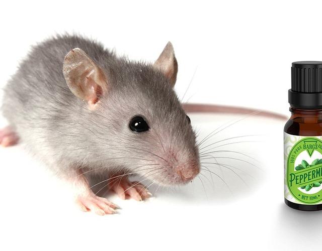Cách đuổi chuột ra khỏi nhà đơn giản mà hiệu quả không ngờ - 5