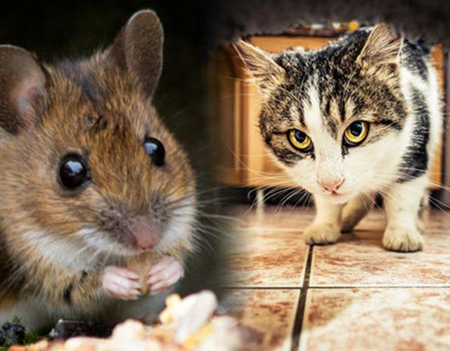Cách đuổi chuột ra khỏi nhà đơn giản mà hiệu quả không ngờ - 3