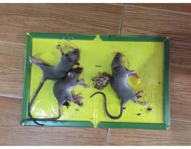 Cách đuổi chuột ra khỏi nhà đơn giản mà hiệu quả không ngờ - 10
