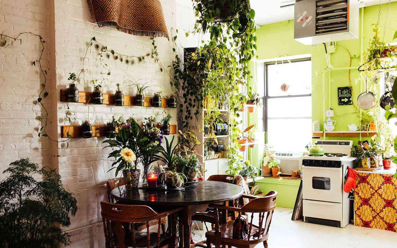Nếu khu bếp đặt loại cây phong thủy này, gia chủ sẽ lên như amp;#34;diều gặp gióamp;#34; - 5