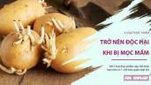 5 loại thực phẩm trở nên cực kỳ độc hại khi để mọc mầm