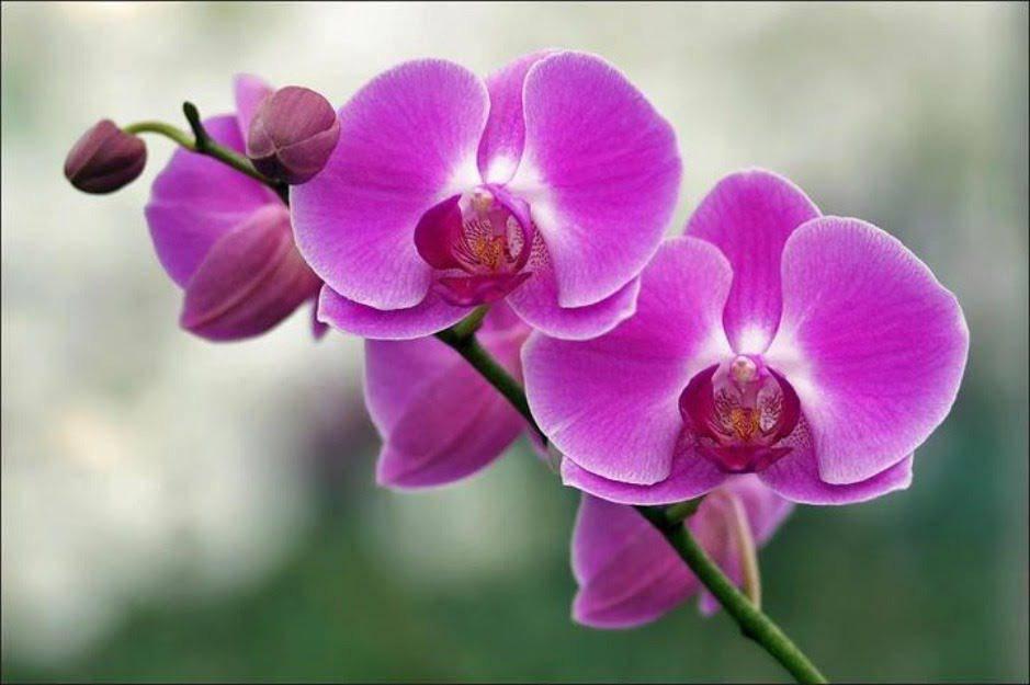 5 loại cây phong thủy hút tài lộc cực đỉnh, gia chủ nghèo khó mấy cũng làm ăn vượng phát - 5