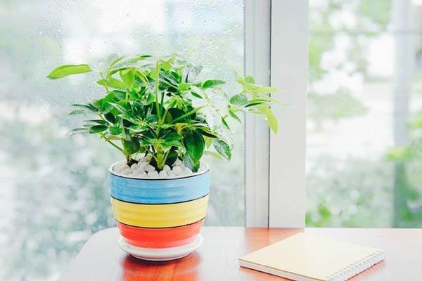 12 loại cây phong thủy theo tuổi, mệnh mang lại tài lộc và sức khỏe - 7