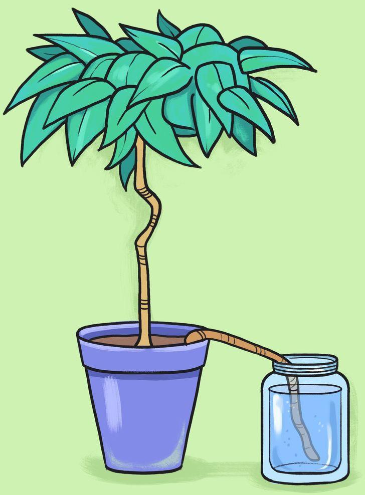 5 cách cực thông minh để tưới cây khi bạn vắng nhà - 6