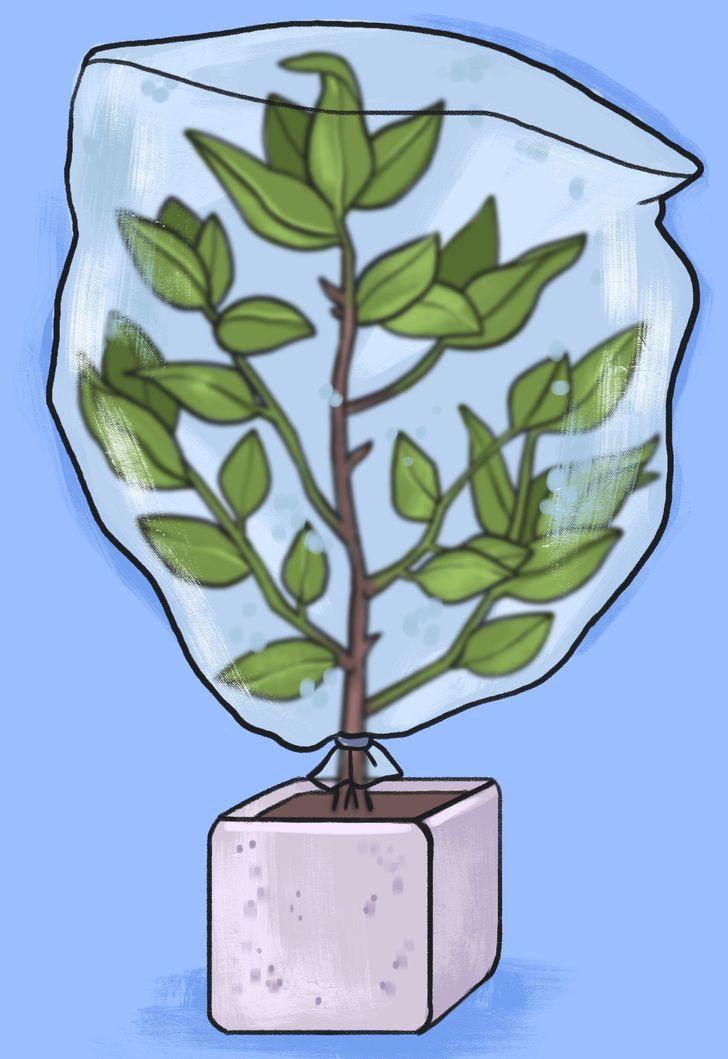 5 cách cực thông minh để tưới cây khi bạn vắng nhà - 8