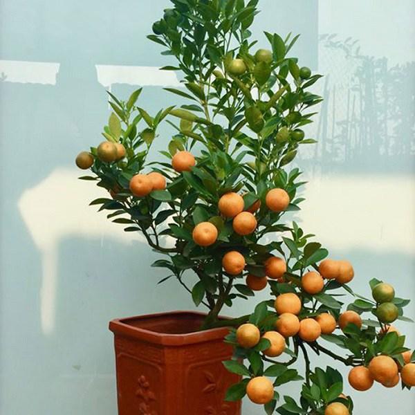 15+ Cây trồng trong nhà tốt nhất cho sức khỏe và phong thủy - 20