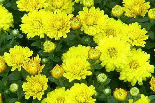 Hướng dẫn cách cắm hoa ngày Tết đẹp để rước tài lộc, may mắn - 7