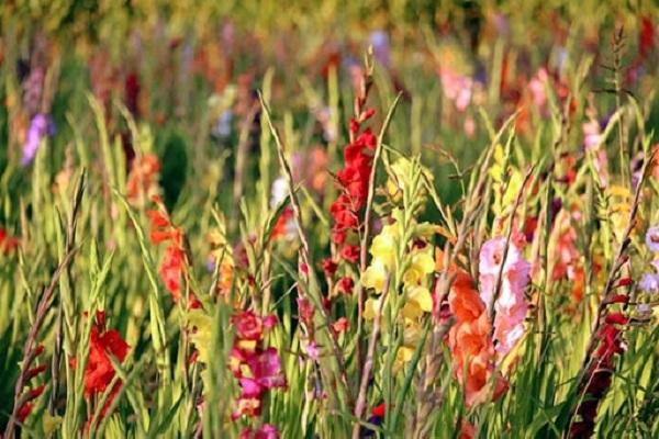 Hướng dẫn cách cắm hoa ngày Tết đẹp để rước tài lộc, may mắn - 5