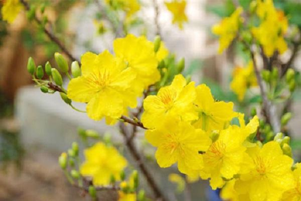 Hướng dẫn cách cắm hoa ngày Tết đẹp để rước tài lộc, may mắn - 3
