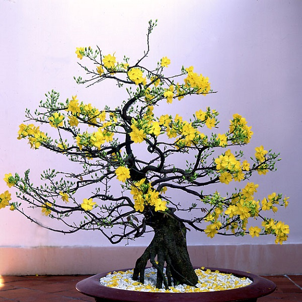 Hướng dẫn cách cắm hoa ngày Tết đẹp để rước tài lộc, may mắn - 10