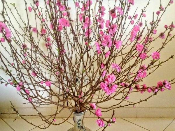 Hướng dẫn cách cắm hoa ngày Tết đẹp để rước tài lộc, may mắn - 8
