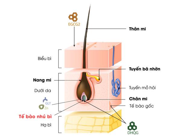 Redensyl – hoạt chất đột phá hỗ trợ giảm rụng mi, giúp mi mọc dày, dài và cong tự nhiên - 1