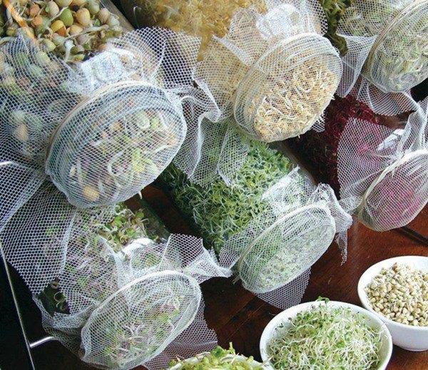 Học ngay 2 cách trồng rau mầm đơn giản trong 1 tuần, rau giòn bùi cực ngon - 4