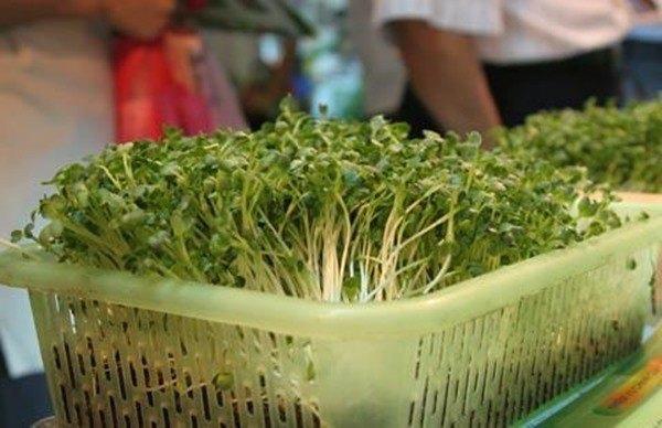 Học ngay 2 cách trồng rau mầm đơn giản trong 1 tuần, rau giòn bùi cực ngon - 3
