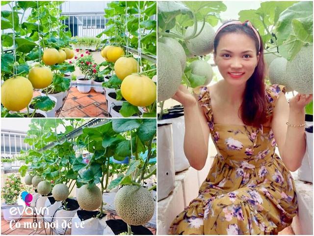 Cô gái 9X biến 50m² sân thượng thành vườn dưa sai trĩu trịt, làm giàn treo cực chất